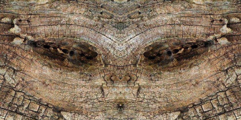 Bestiario-Guillem_Vidal-18