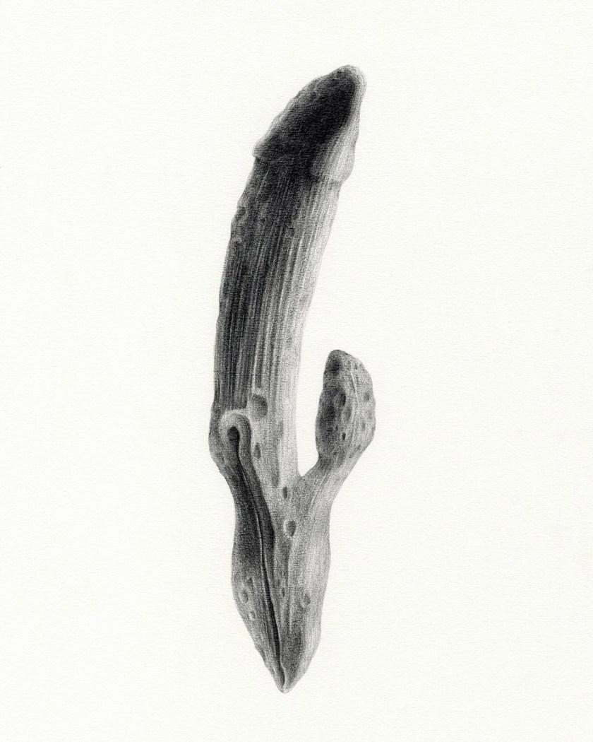 felipe-ortega-regalado-amor-vegetal-de-huerto-y-de-bosques-14