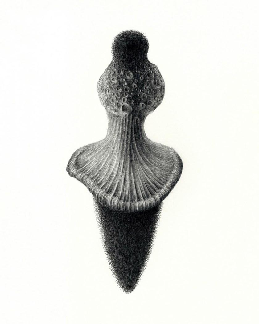 felipe-ortega-regalado-amor-vegetal-de-huerto-y-de-bosques-16