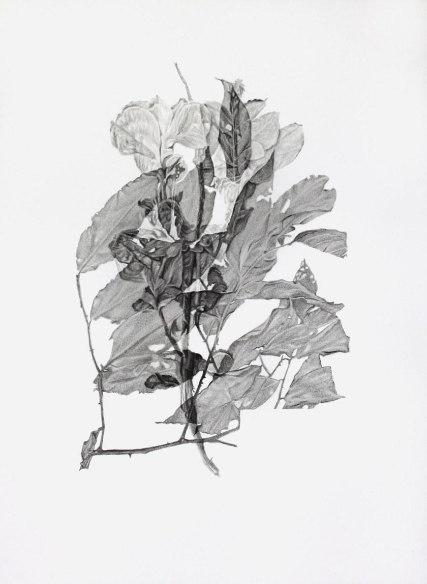 gabinete-de-dibujos-ernesto-casero-las-plantas-perdidas-01