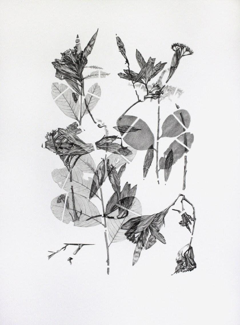 gabinete-de-dibujos-ernesto-casero-las-plantas-perdidas-03