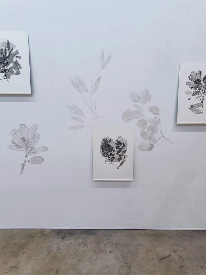 gabinete-de-dibujos-ernesto-casero-las-plantas-perdidas-11