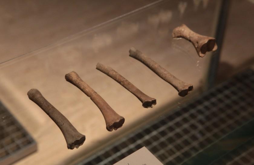 arte-prehistorico-de-la-roca-al-museo-15