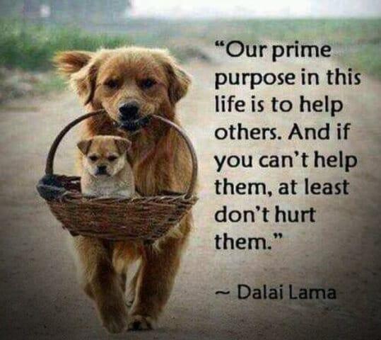 如果無法幫助他人 至少不要害別人