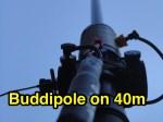 Buddipole vertical on 40m