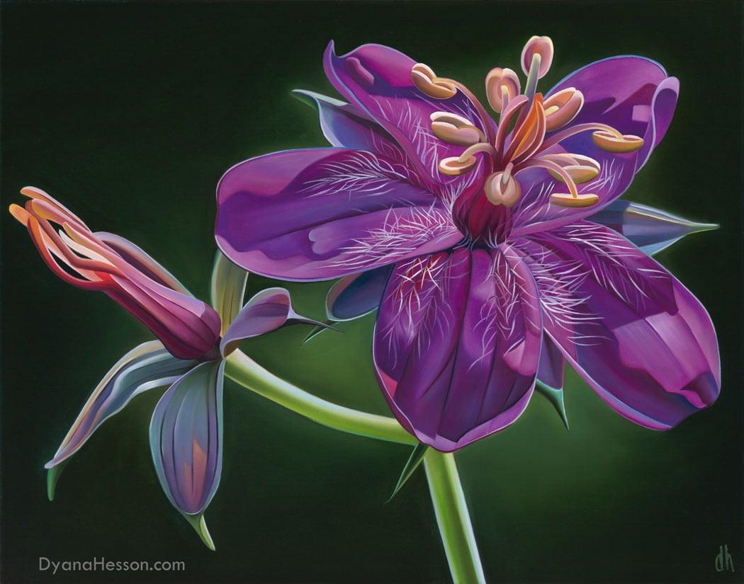 Dyana Hesson Bright Spot Wild geranium White Mountains AZ