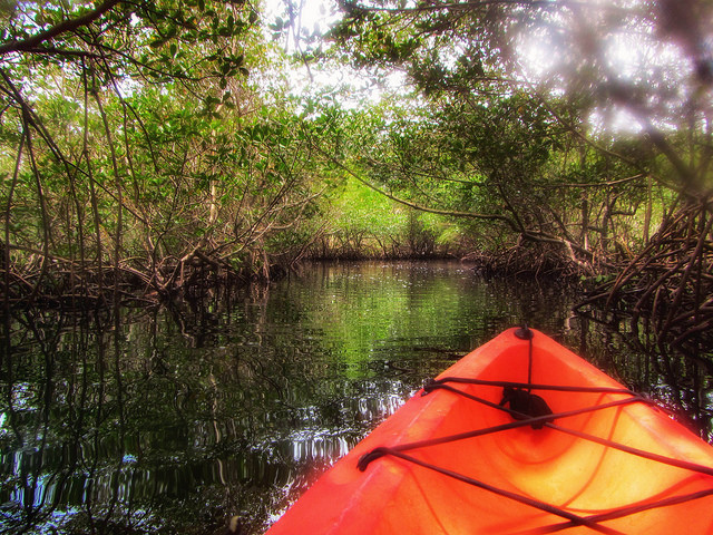 Kayaking Mangrove Tunnels at Weedon Island