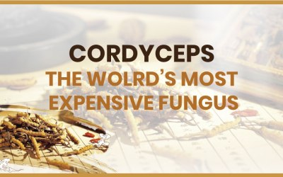 Cordyceps – The World's Most Expensive Fungus