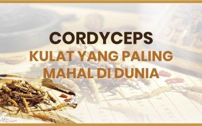 Cordyceps – Kulat yang Paling Mahal di Dunia
