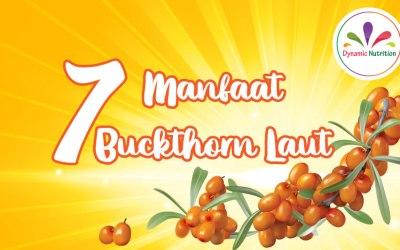 7 Manfaat Buckthorn Laut