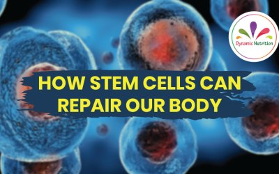 How Stem Cells Can Repair Our Body