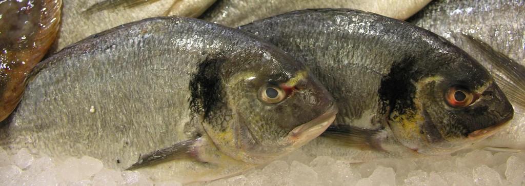 Peixe.Dourada.Fish
