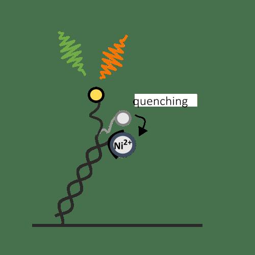 Real-time measurement of nickel ion chelation kinetics
