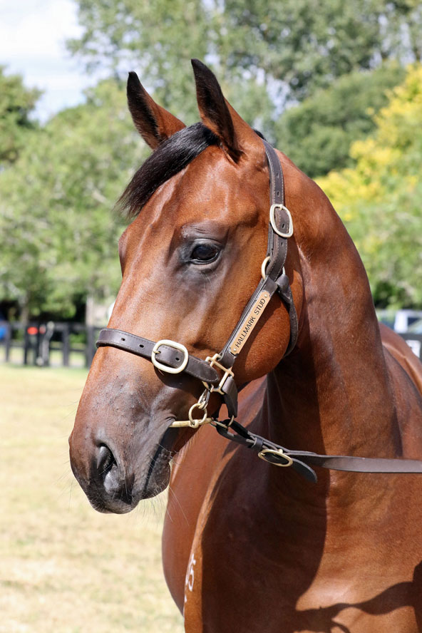 Racing Syndicate Shares on Offer | Horse Shares | Horse ...