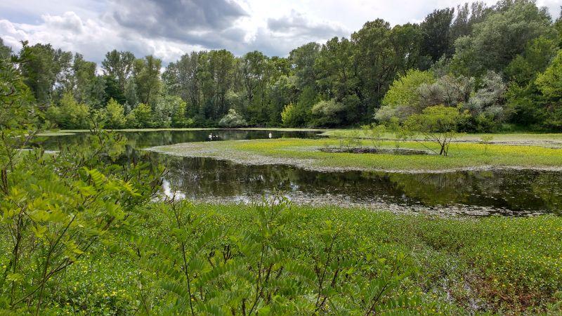 Photo du lac de Meyrol (projet de renaturation de cette zone humide)
