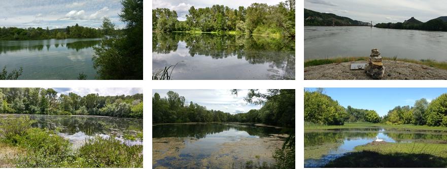 Photos du Rhône pour une maîtrise d'œuvre de restauration écologique des marges alluviales