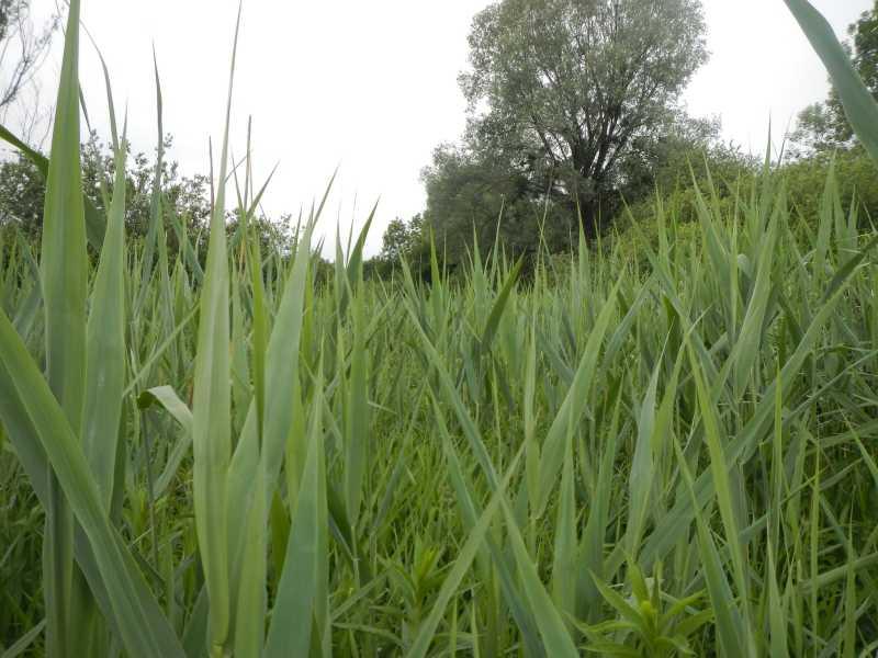 Marais des Tattes