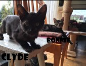 Bonnie og Clyde