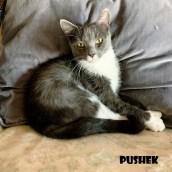 Pushek
