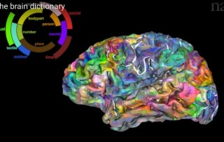 Your Brain with Words - Semantic Word fMRI
