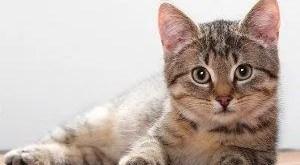 Kedi Kısırlaştırma Sonrası Bakım Nasıl Olmalı?