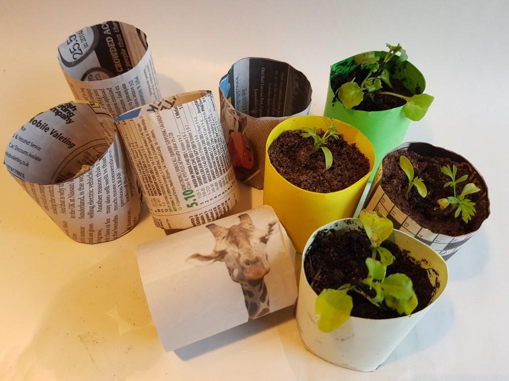 4cm paper pots made using the e-pots paper pot maker