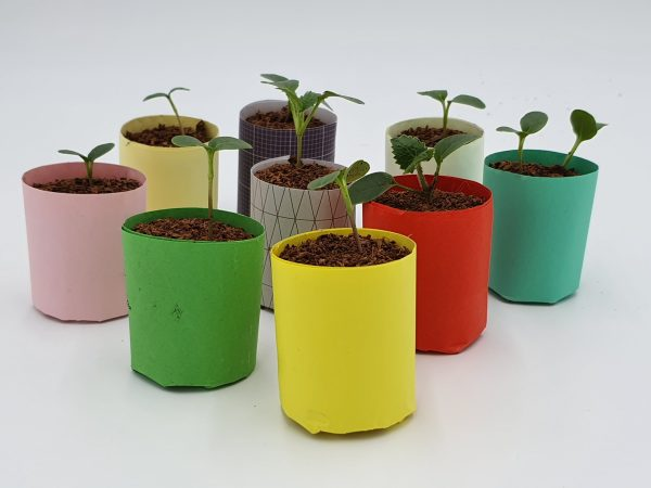Paper Pots made using the e-pots Paper Pot maker
