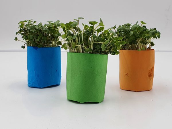 Make Your Own Pot and Grow your own Cress