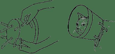 Ветеринарный справочник для владельцев кошек