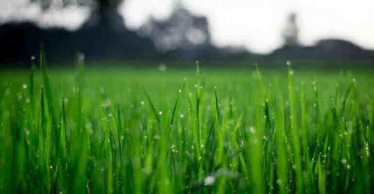 Зелена тревна площ