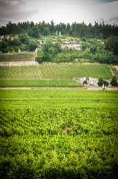 While Côte Chalonnaise is not as renowned as its northern neighbour, it's much more a microcosm of Burgundy and offers a great variety in the wines produced.