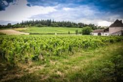 Vineyards of Mercurey in Côte Chalonnaise