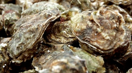 Eating oysters is like kissing the sea on the lips