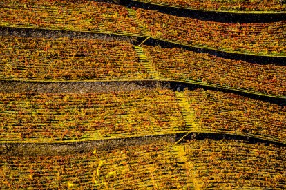 Amazing terraced vineyards of the Douro valley