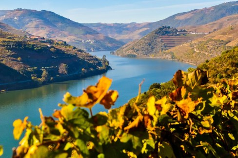 Douro valley - home of the vines that become dark reds and celebrated Ports