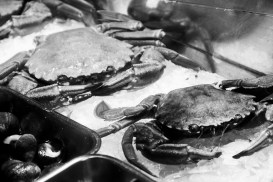 crab seafood (nécoras gallegas)