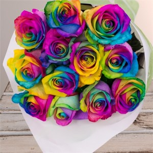 Dyed or Tinted Roses