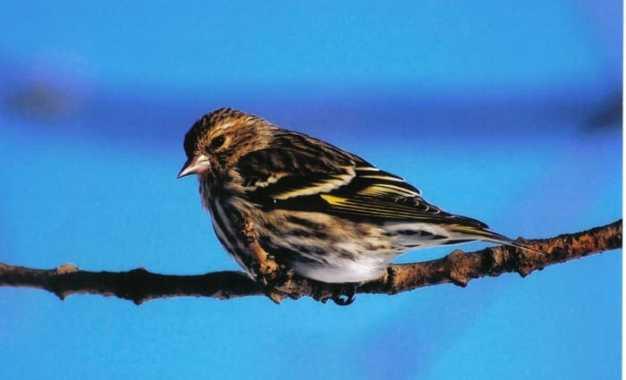 Chenango Bird Club announces photo contest