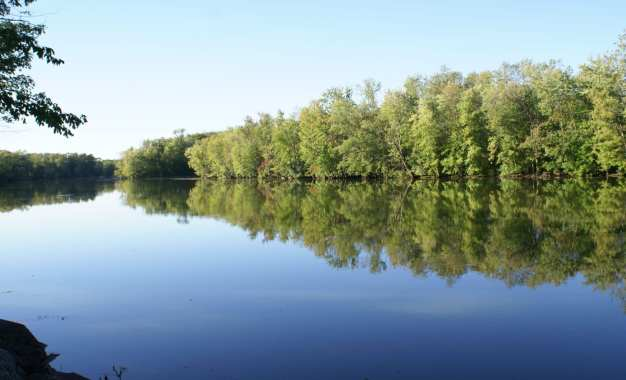 Annual elimination of water chestnuts in the Seneca River begins July 23