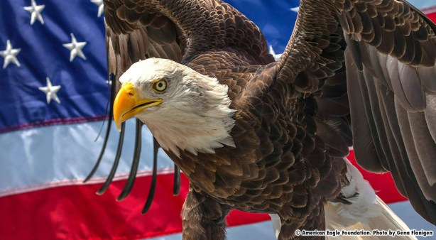 Image result for challenger eagle