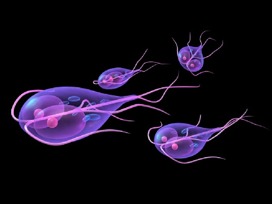 symptoms and prevention of giardia | eagle water treatment systems, Sphenoid