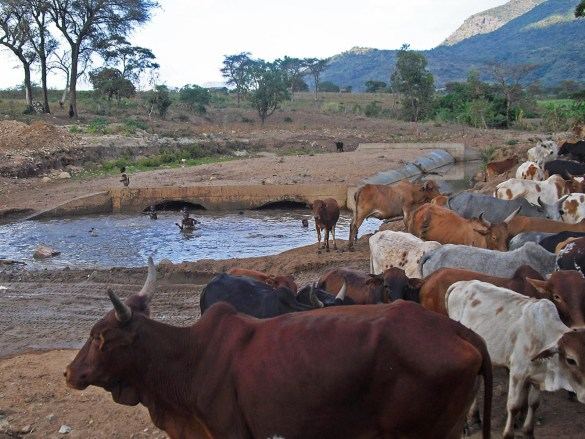 Omo Valley-animali-pozza-Etiopia-Africa