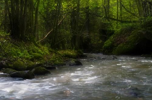 Grönån i Rapenskårslövskogar