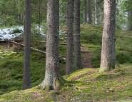 Skogen i Ånnaboda naturreservat