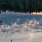 Spindel i norra ånnabodasjön