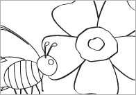 Early Learning Resources Minibeasts Colouring In Sheets