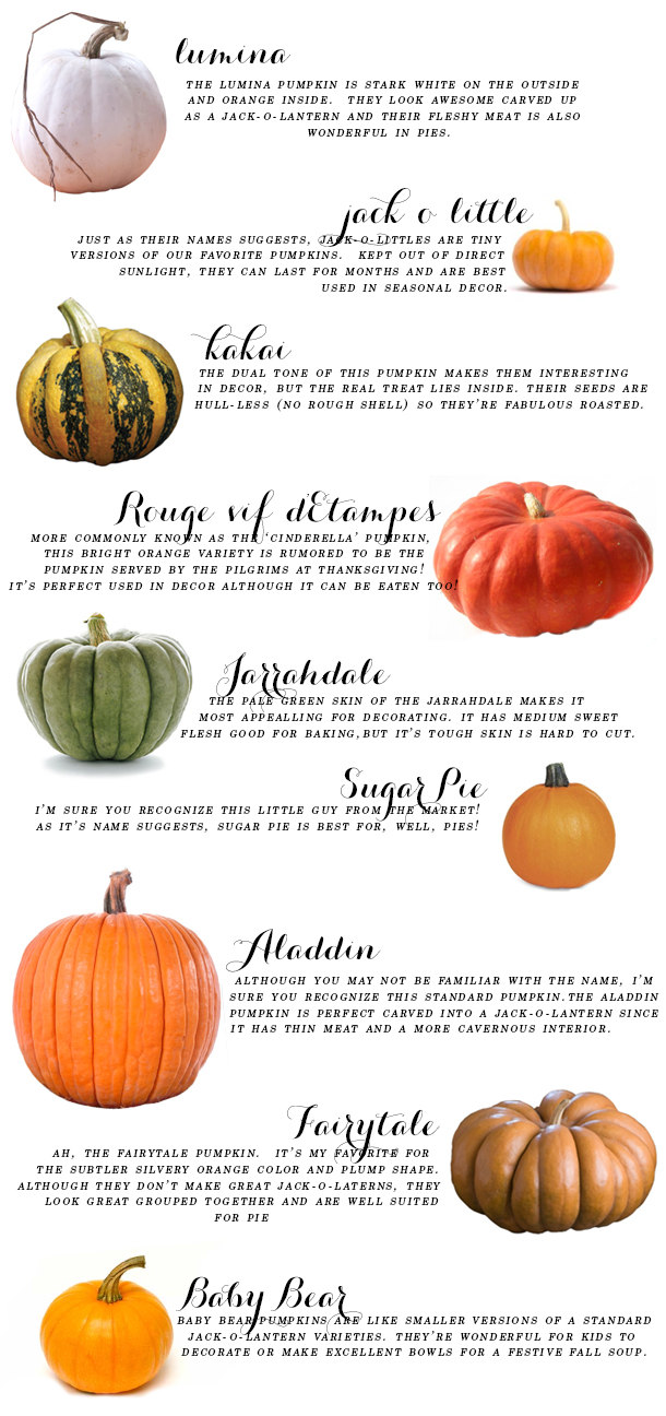ultimate pumpkin guide