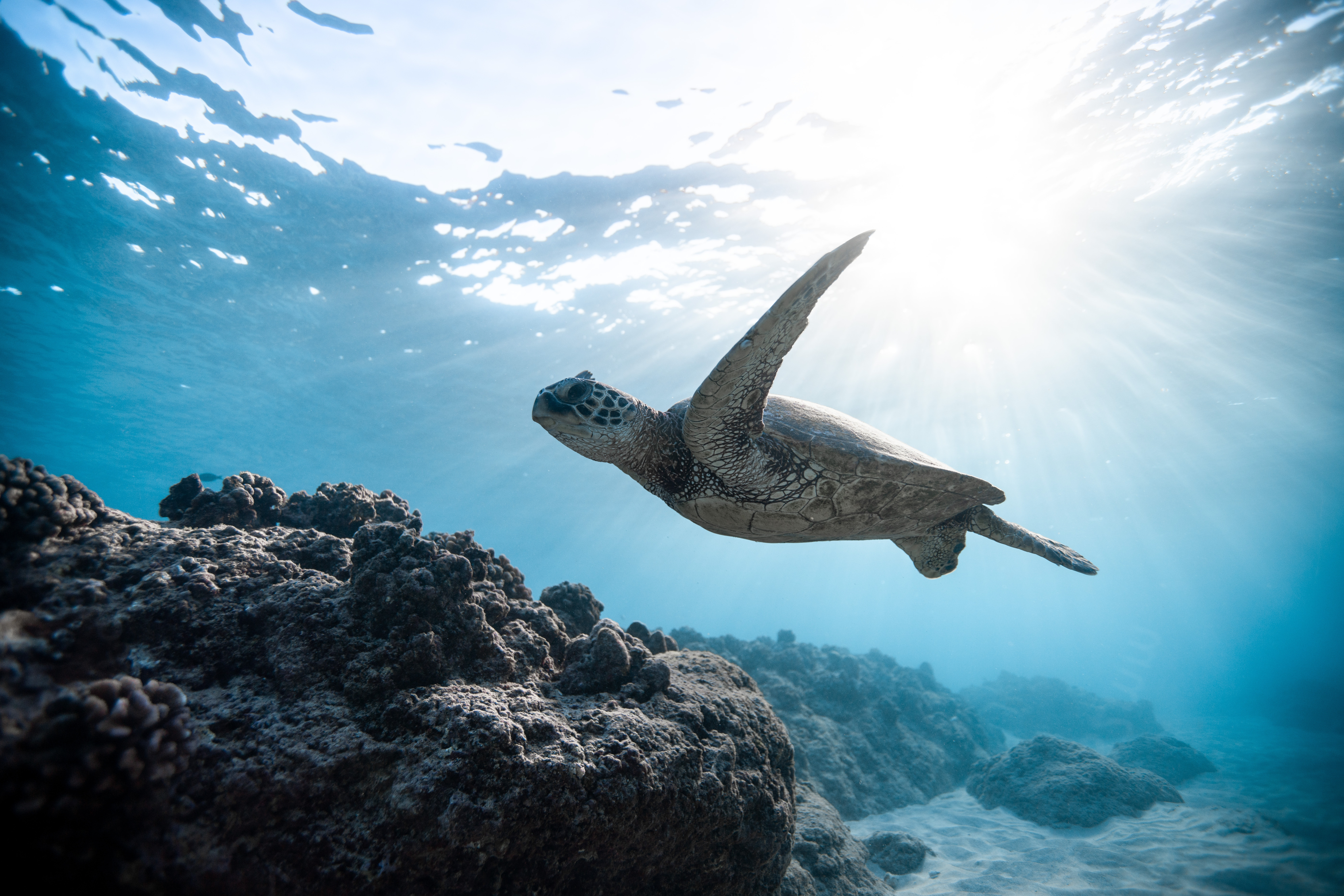 Sea Creatures Quiz With Answers