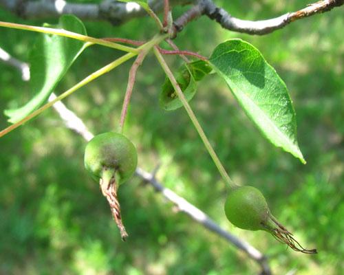 Native Southern Ontario Trees