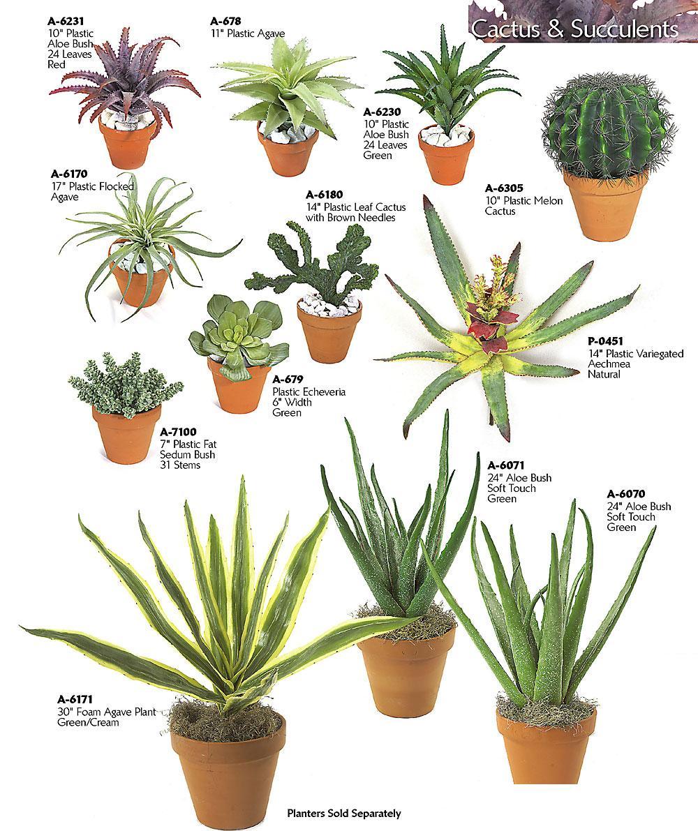 Succulent Kinds Plants